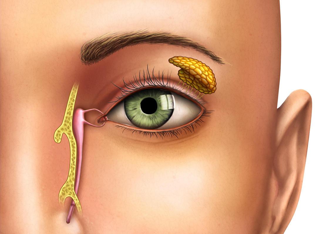 https://drmuddazir.ae/wp-content/uploads/2018/02/endoscopic-dcr-surgeries.jpeg